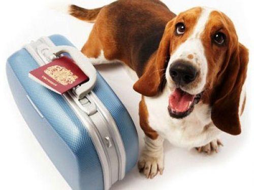 Chip 247 (Mascotas):        1080 Viajar En Avion Con Mascotas