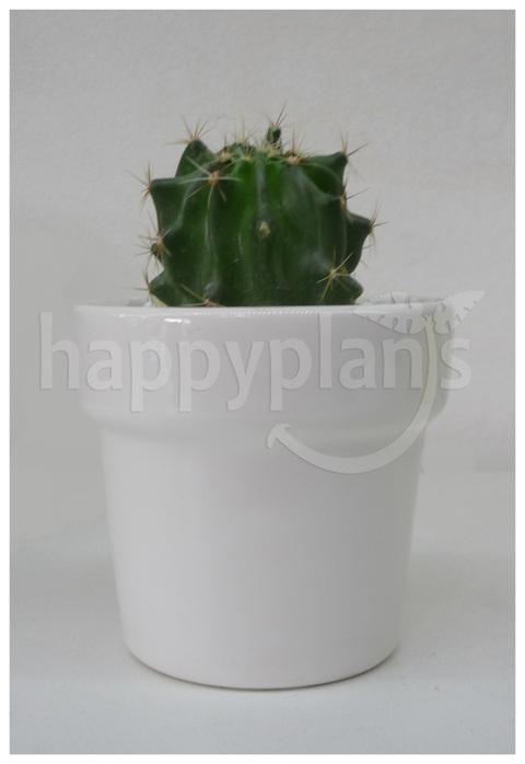 Happy Plants (Decoración, Bazar & Hogar):