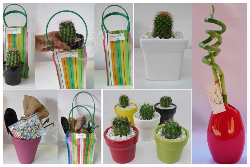 Happy Plants (Decoración, Bazar & Hogar):        Todos 7ec9956fcbca82e01b93f66b47d723a61391395631
